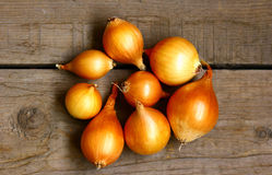 The onion on the wooden boards. Eight bulbs, a big plan, a bright Golden color Royalty Free Stock Image
