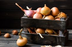 Onion in a wooden box on a dark background. Organic home onion in a wooden box on a dark background Royalty Free Stock Photography