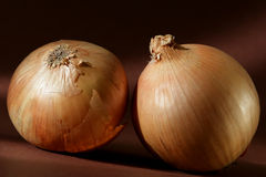 Onions. You see two onions on brown background Stock Photography