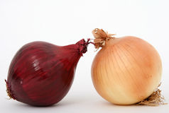 Onions. Onion isolated on white, macro close up with copy-space, copy space Royalty Free Stock Images