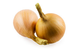 Onions. Two onions on white background Stock Images