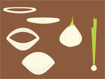 Onions. And onion slices on a brown background vector illustration