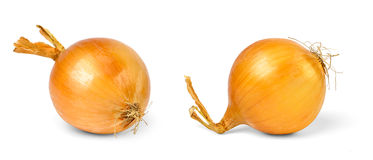 Onions. Two onions over white background royalty free stock image