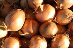Onions. A collection of onions on the market Royalty Free Stock Image