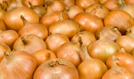 Onions. Large onions background, close up Stock Photography