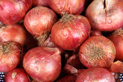 Onions Stock Images