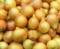 Onions. Harvested onions Stock Photos