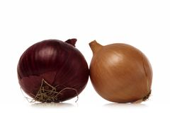 Onions. Two onions isolated over white background Royalty Free Stock Photos