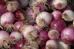 Onions. At a market Royalty Free Stock Images