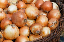 Onions. Some beautiful onions in a wooden basket Royalty Free Stock Photos