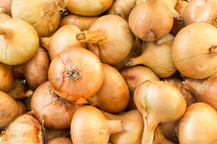 Free Onions Stock Photography - 34194202