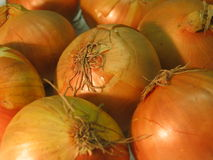 Onions. Close up of onions Royalty Free Stock Photography