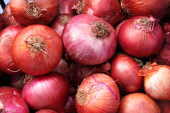 Free Onions Royalty Free Stock Images - 61350379