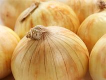 Onions. Yellow onions stock photography