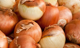 Onions. Pile of brown skinned onions Stock Photos