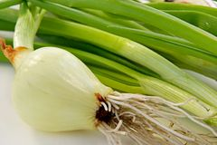 An onions Stock Photo