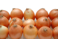Onions arranged in rows. Isolated on white Royalty Free Stock Photos