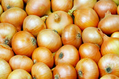 Onions. Background. Stock Photo