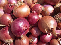 Onions Background Stock Photos