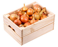 Onions in a box  Stock Photo