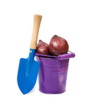 Onions in the bucket  Royalty Free Stock Photography
