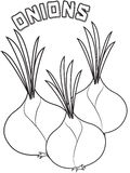 Onions coloring page Royalty Free Stock Image