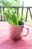 Onions. A cup of green onions (sometimes called shallots or scallions Stock Image