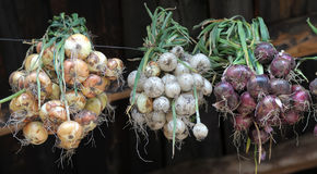 Onions of different colors. Associated dried beams under the roof Royalty Free Stock Images