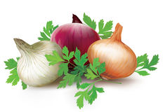 Onions of different colors and parsley Stock Image