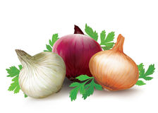 Onions of different colors Royalty Free Stock Photos