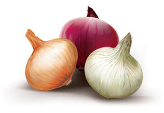 Onions of different colors Stock Photo