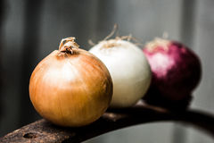 Onions of different qualities on a rusty iron Royalty Free Stock Image
