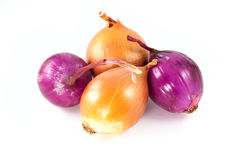 Onions family Royalty Free Stock Images
