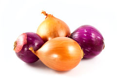 Onions family Royalty Free Stock Photo