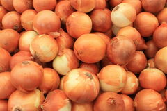 Onions fresh harvest of summer Stock Photography