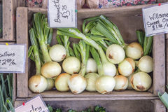 Onions Royalty Free Stock Photo