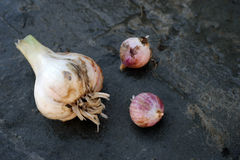 Onions and garlic of local varieties grown on an ecological farm. Using natural organic fertilizers from cow and chicken manure royalty free stock photos