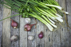 Onions garlic and welsh onion Stock Images