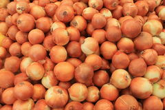 Onions gold big harvest on a table Stock Image
