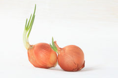 Browned onions. Royalty Free Stock Photos