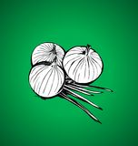 Onions. On a green background Stock Images