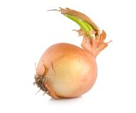 Onions with green scion Stock Photo