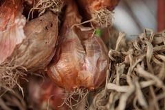 Onions with green stems grow out. Royalty Free Stock Photos