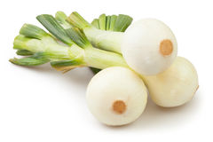 Onions group Stock Image