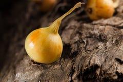 Onions on grunge wood Stock Photo