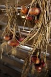 Onions hanged in a storeroom Royalty Free Stock Photography