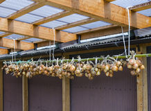 Onions Hanging on Bamboo Pole Stock Image