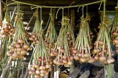 Onions hanging to dry. Stock Photography