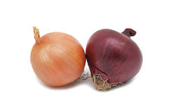 Onions, isolated Stock Photography