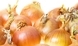 Onions (isolated) Stock Image